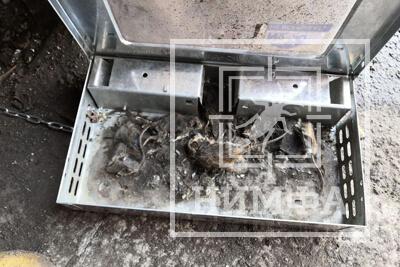 Живоловка с пойманными мышами