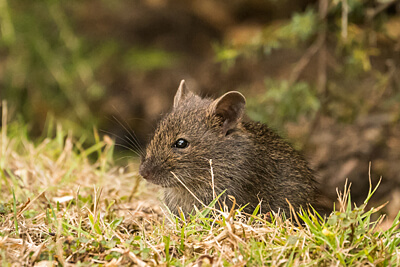 Мыши на территории объекта
