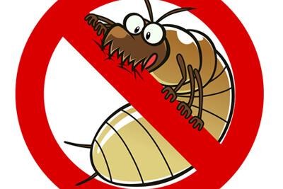 Дезинсекция - это уничтожение насекомых
