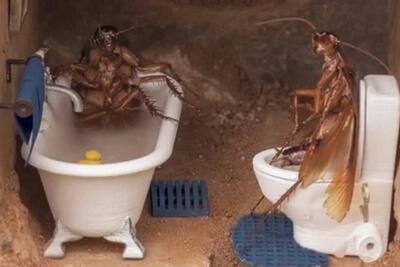 Тараканы часто селятся на кухне и сан. узлах