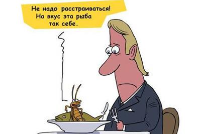 Тараканы всеядные