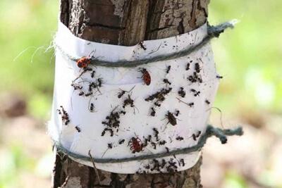 Применение липких лент от насекомых
