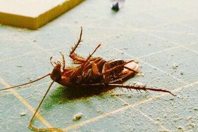 Контактные инсектициды