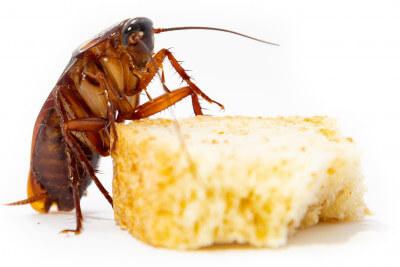 Кишечные ядохимикаты от насекомых