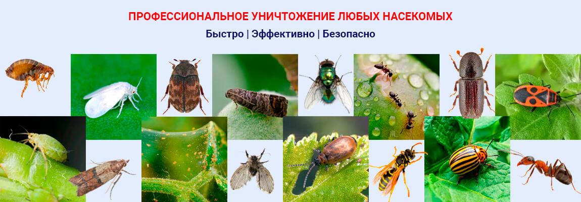 Профессиональное уничтожение насекомых вредителей