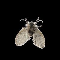 Уничтожить бабочниц