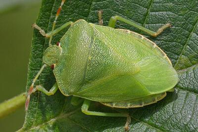 Хитиновый покров способствует выживаемости насекомых в природе