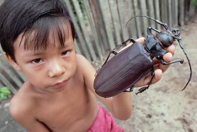 Дровосек-титан – насекомое-гигант