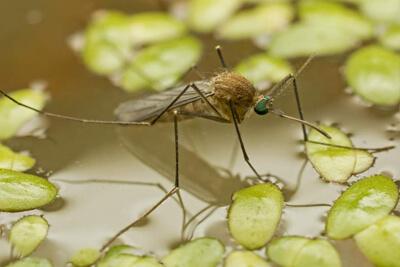 Укусов комаров возле воды больше