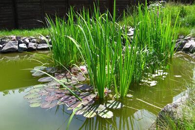 Комары обитают в стоячей воде