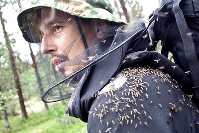 Накомарник защищает от укусов комаров