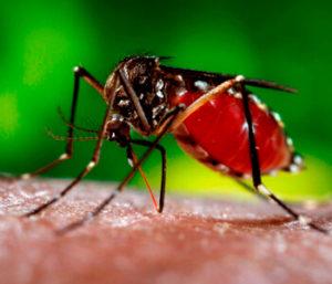 Как избавиться от укусов комаров?