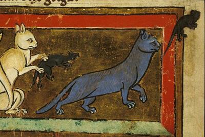В Средневековье против грызунов использовали кошек